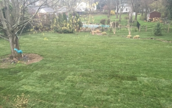 Sod Installation - After (Bravo)