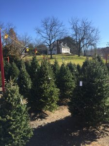 fresh cut christmas trees catonsville