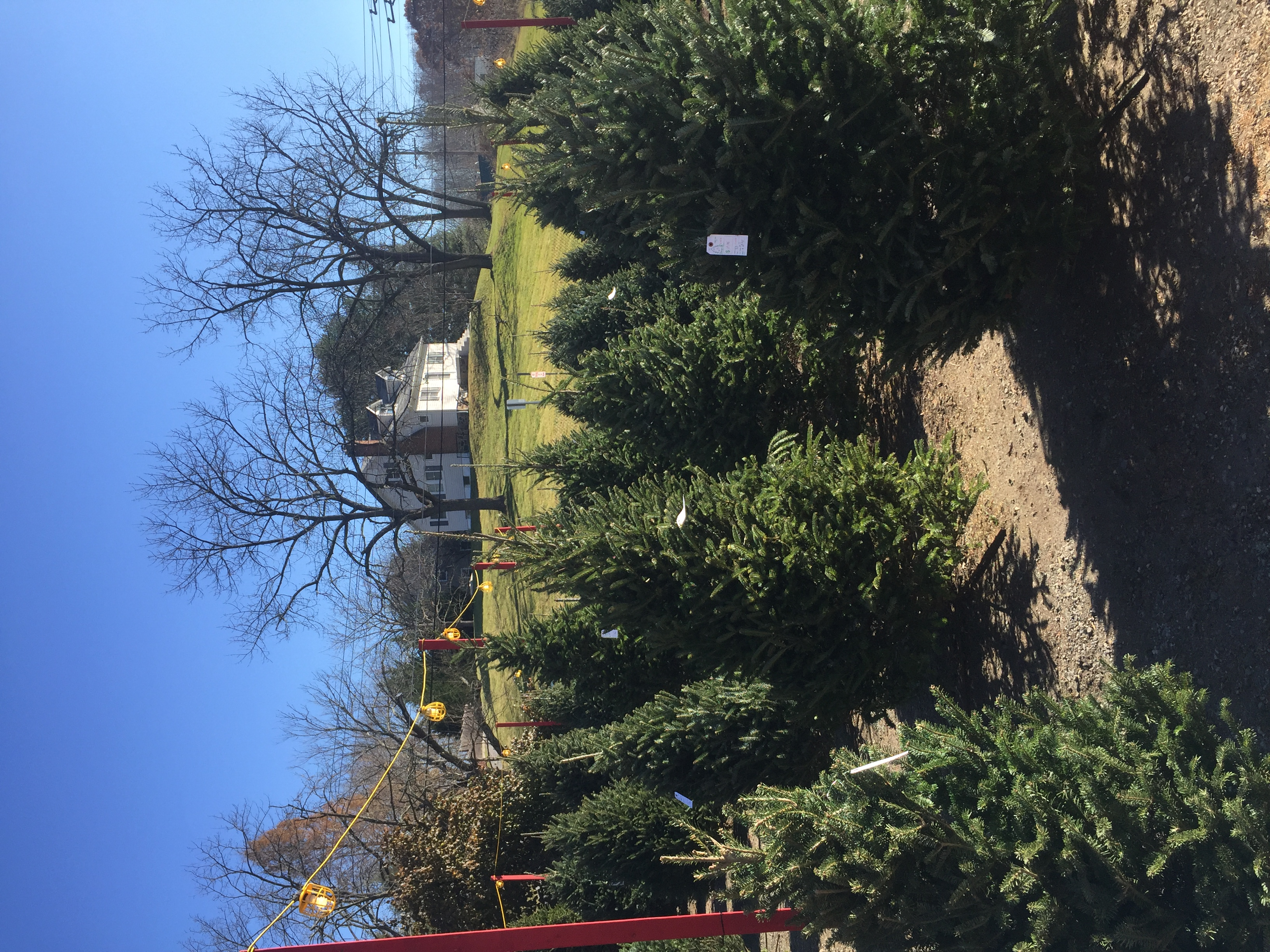 Fresh christmas trees in catonsville md wreaths
