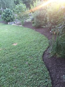 mulching and edging