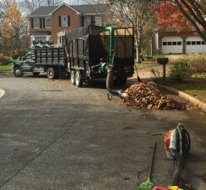 professional leaf removal